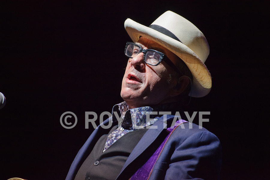 Elvis-Costello_7463