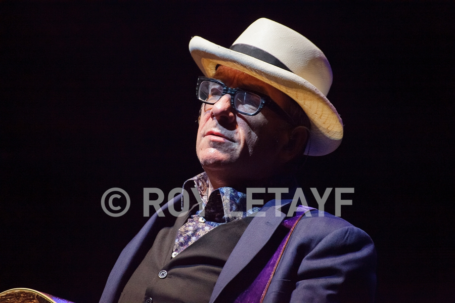 Elvis-Costello_7464