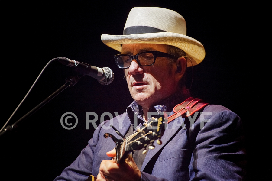 Elvis-Costello_7474