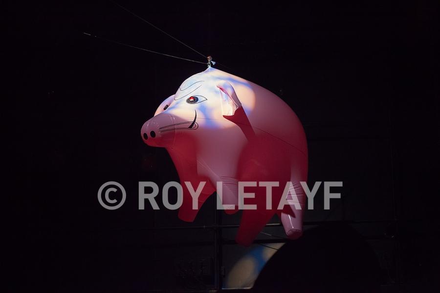 Encore-Floyd_9918